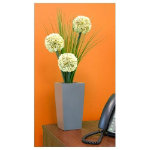 50cm White Allium with Onion Grass in square vase Espresso or Silver