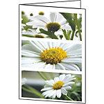 Carte de félicitations avec motif floral Sigel DC171 220 g