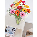 Bouquets de fleurs Bunchmakers Gerberas Assortiment de couleurs