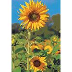 bsb obpacher Grußkarte Sonnenblumen Spezial Mehrfarbig 10 Stück