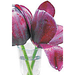 Cartes de vœux bsb obpacher Tulipe 11.5 x 17 cm Spécial Assortiment 10 Unités