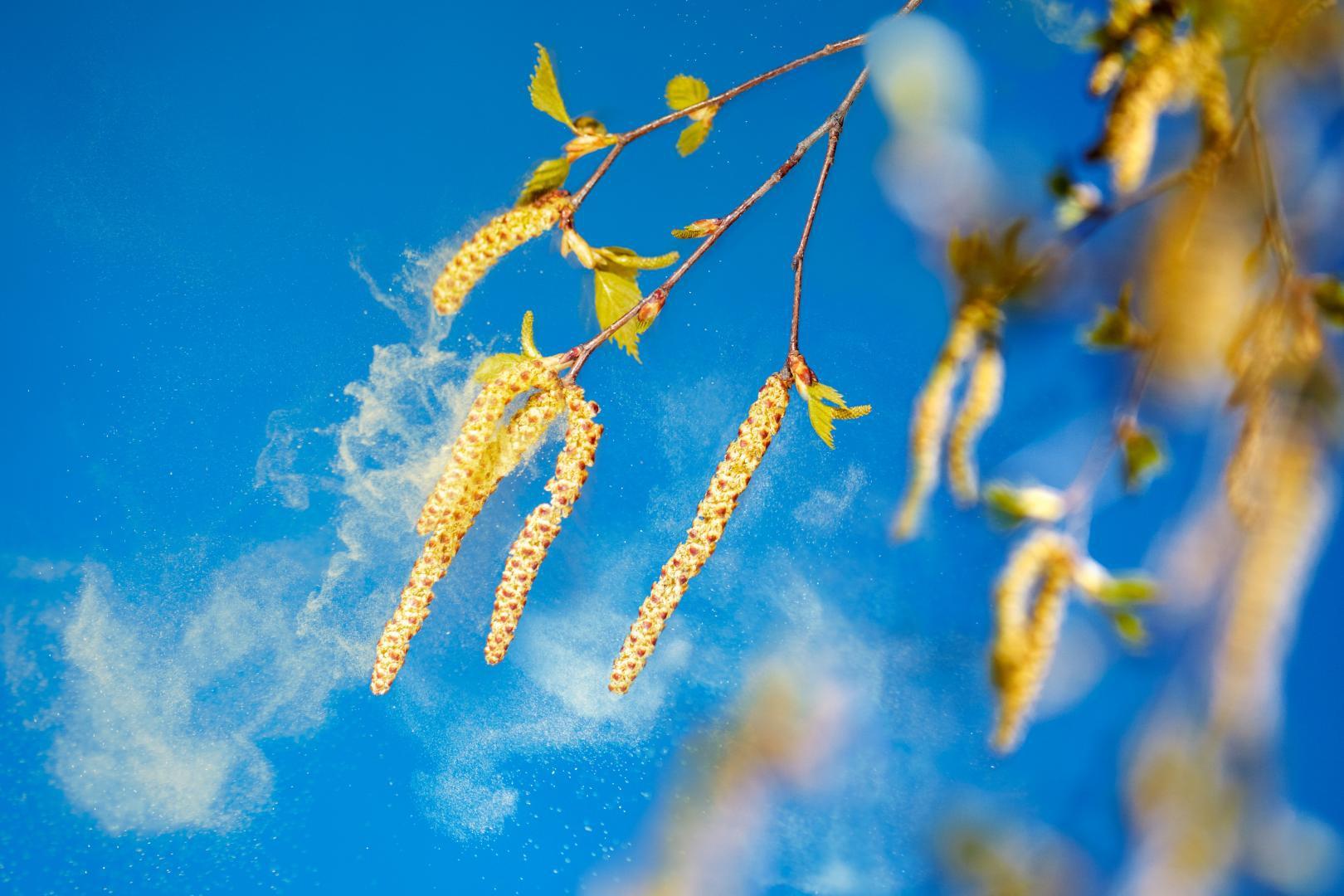 Pflanzenpollen in der Luft